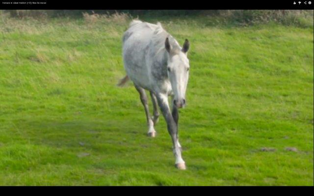 Horses in slow motion