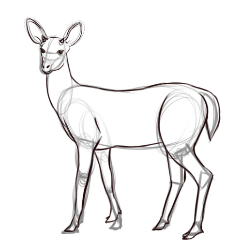 Pencil Sketches And Drawings: How To Draw A Deer