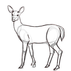deer draw drawing drawings outline sketch step easy dear simple pencil sketches wikihow drawn line animal doe stuff tutorials basic
