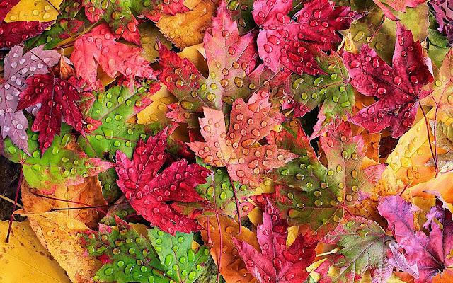 Wallpaper met gekleurde herfst bladeren