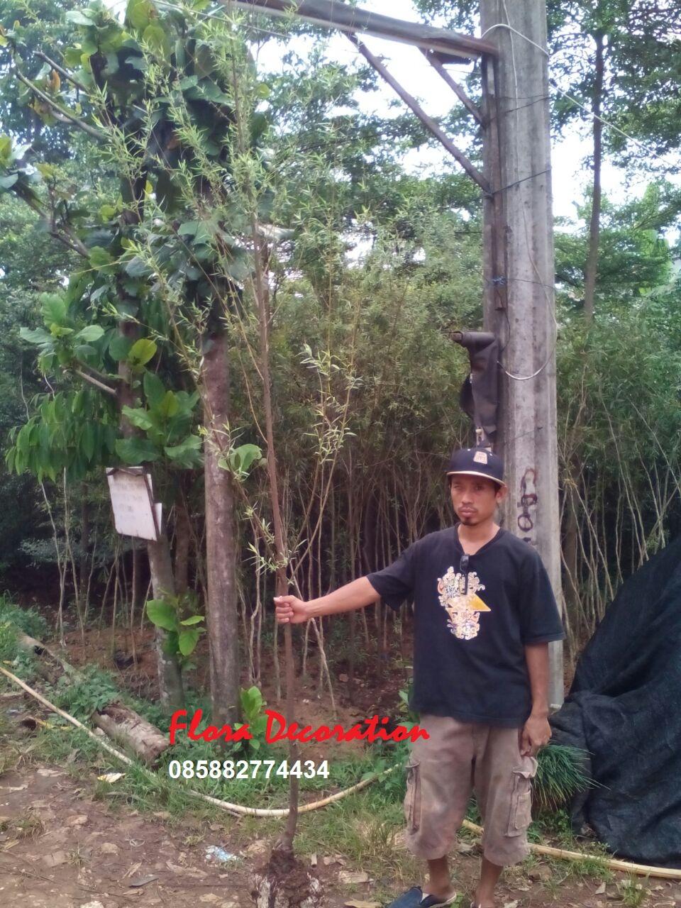 Tukang Taman Murah Janda Merana