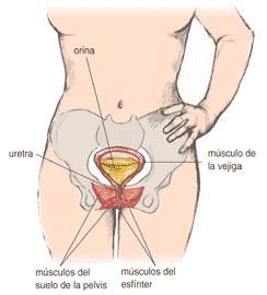 remédio para infecção urinária pode atrasar a menstruação