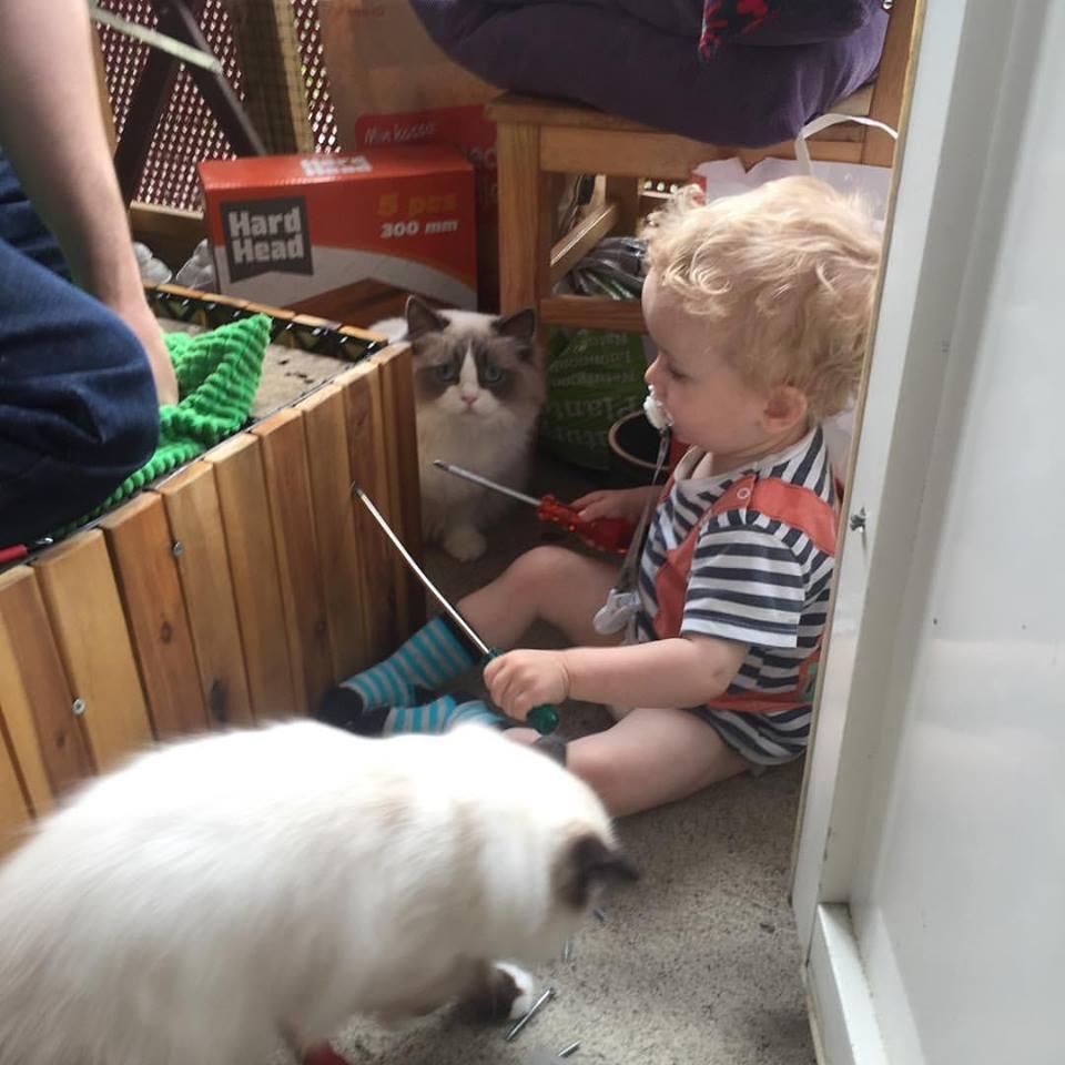 Kucing dan anak kecil
