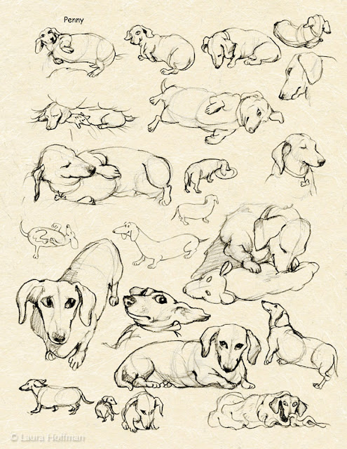 Laura Hoffman Illustration Amp Design My Muse Penny The Dachshund