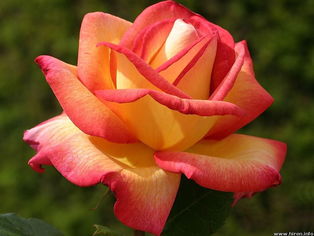 FUCHSIA & HOT PINK Bouquets : DebbieCoFlowers.com, Silk ...   Orange And Pink Roses
