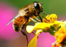 mật ong nguyên chất có màu gì