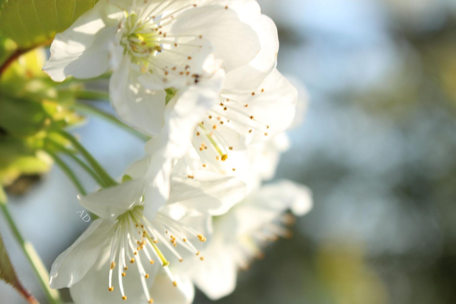 Le printemps est là ! Nouvelles fleurs, nouvelles résolutions
