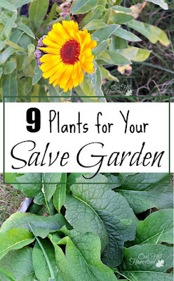9 plants that belong in your salve-making garden.