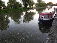 """The solar canal boat Dragonfly, aka """"SlowBoat,"""" docked in Lyons, NY"""