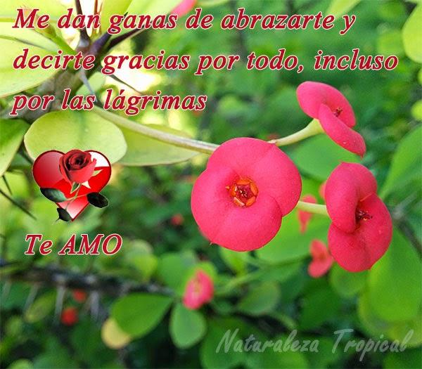 Postal de amor con flor coronita de cristo