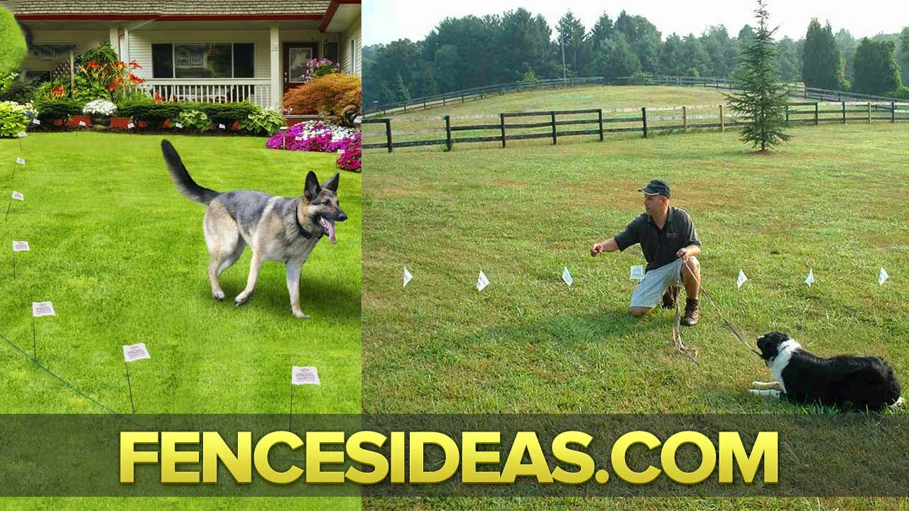 Invisible Fence Invisible Fence For Dogs Petsafe Fence