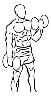 Biceps Workouts
