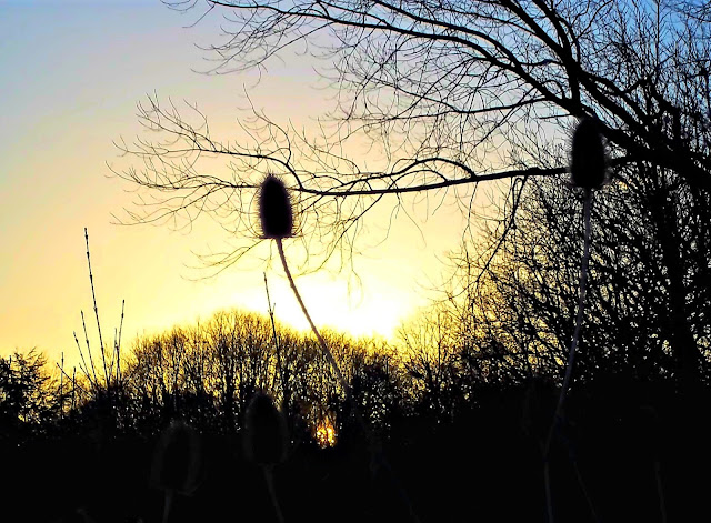 Sunset with a silhouette of teazles and other bracken-type foliage