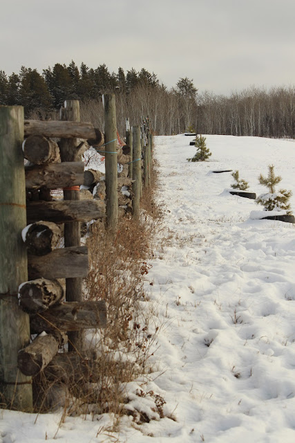Rail Fence in a snowy field