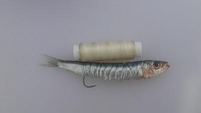 Anzuelado-de-sardina-anzuelo