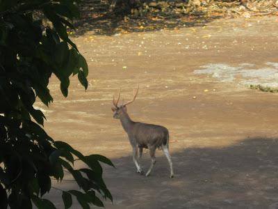 Harga Tiket Masuk Taman Cagar Alam Pangandaran