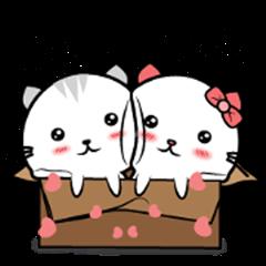 Cat in lover