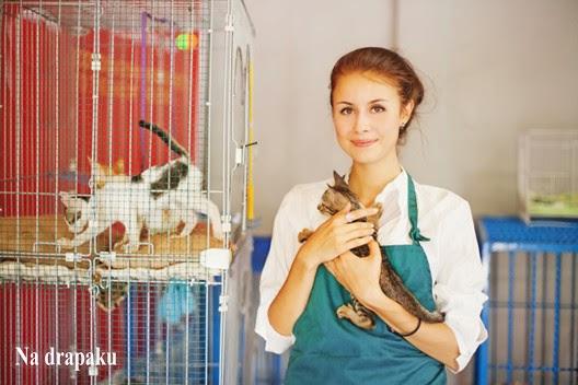 Co powinniśmy zabrać na wystawę kotów?