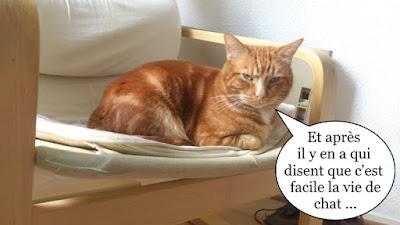 Lionel, le plus beau des chats oranges de Toulouse !