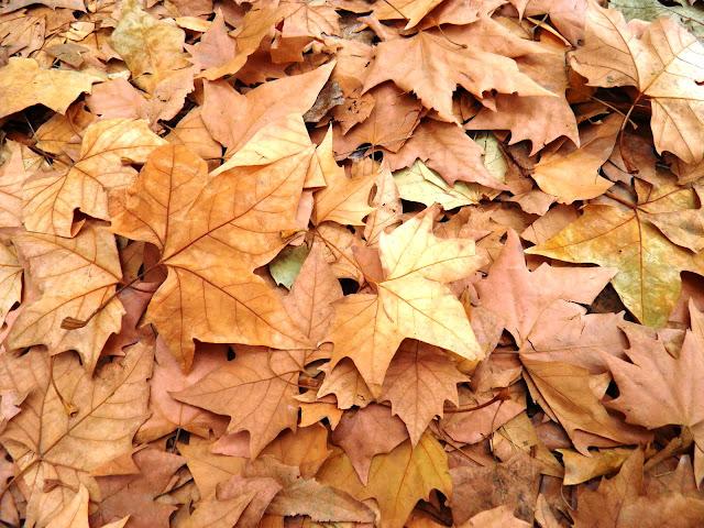 Resultado de imagem para folha seca
