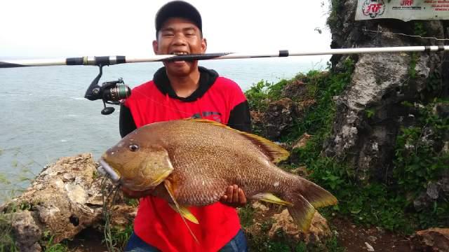Tips Mancing Ikan Kampur  (Karangan) ikan kampo  ikan kampuh ikan sangangin