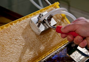 Honey Paw: Το νέο μαχαίρι ατμού έρχεται απο το εξωτερικό video