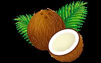 coconut leaf clip art