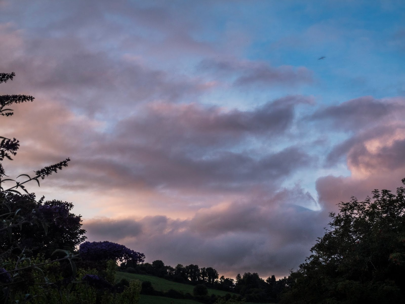 Sunset clouds over some trees and flowers in a valley in County Cork.