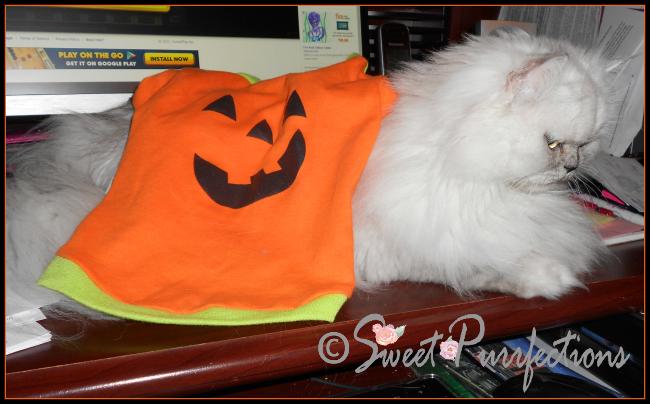 "Truffle ""wearing"" her pumpkin costume"