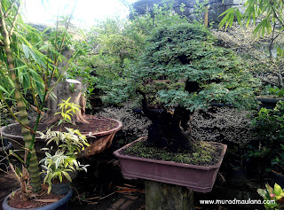 Bonsai Taman Kota 2 BSD City