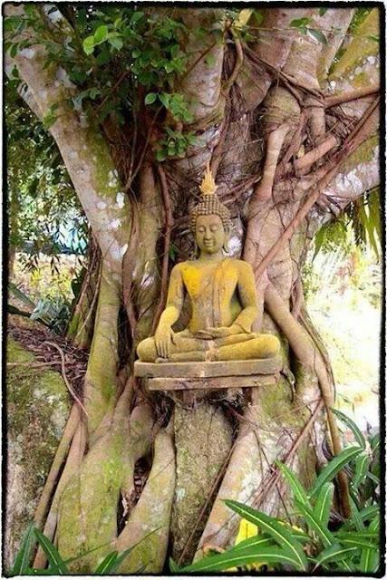 Đạo Phật Nguyên Thủy - Tìm Hiểu Kinh Phật - TRUNG BỘ KINH - Magandiya