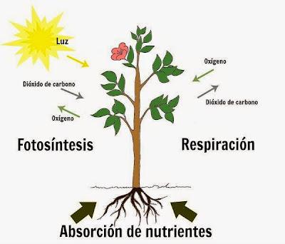 Resultado de imagen de la nutricion de las plantas