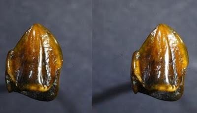 Fosil Gigi Manusia Purba Tertua Ini Mengejutkan Ilmuwan