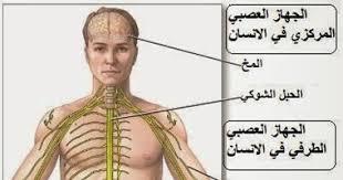 أسعار رسم العصب فى مصر 2021