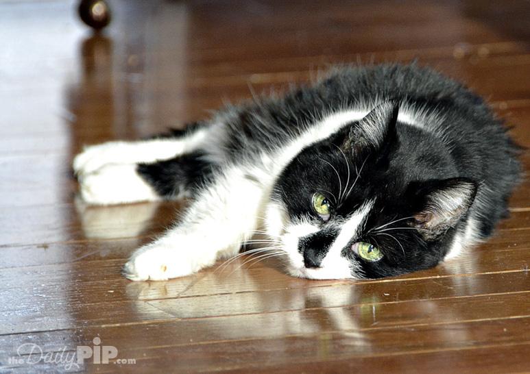 Rescuing and adopting a deaf feral cat