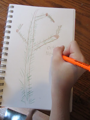 Tree Unit-The Unlikely Homeschool