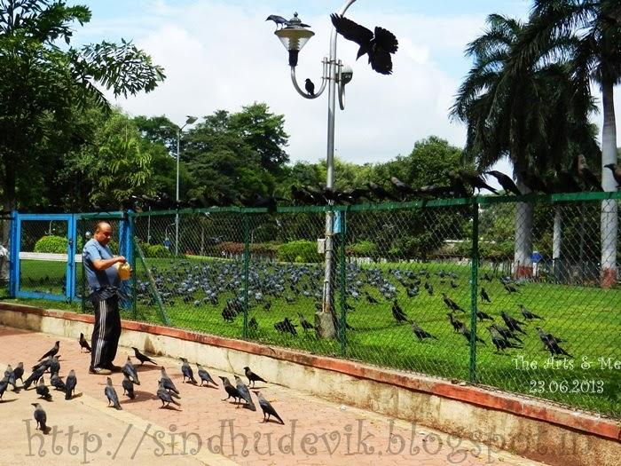 A bird lover feeding snacks to a large number of birds @ Sarasbaug, Pune, Maharashtra