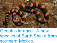 http://sciencythoughts.blogspot.co.uk/2016/08/geophis-lorancai-new-species-of-earth.html