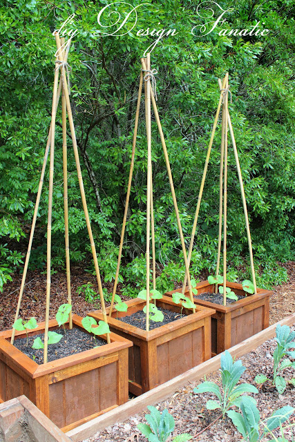 Diy planter boxes for Indoor gardening green beans