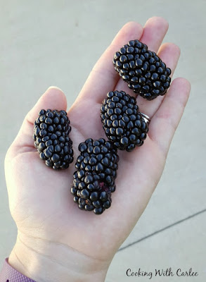 hand full of giant blackberries