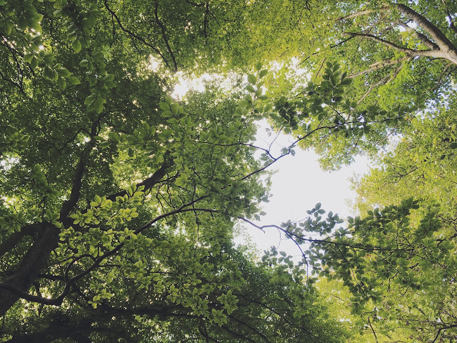 Canopy of green leaves