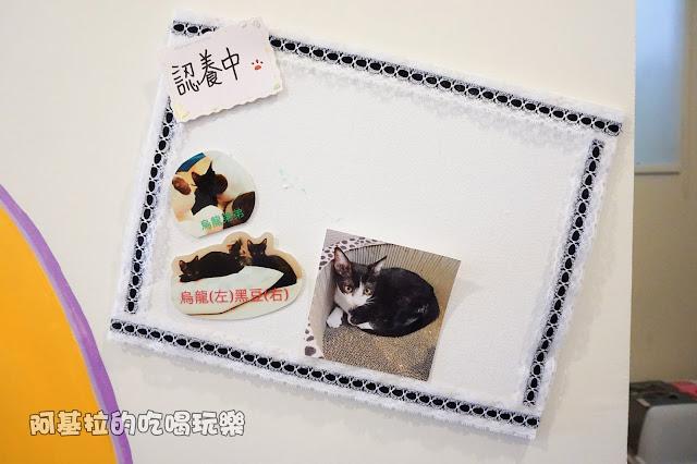 14560177 1099288593457718 8417035114566129687 o - 熱血採訪 朵貓貓咖啡館 - 貓咪餐廳