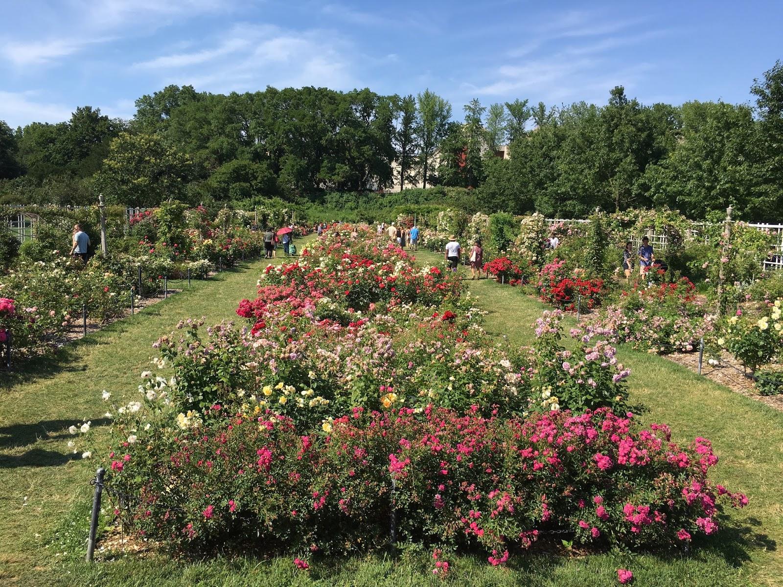 Bart Boehlert\'s Beautiful Things: A Visit to the Brooklyn Botanic Garden