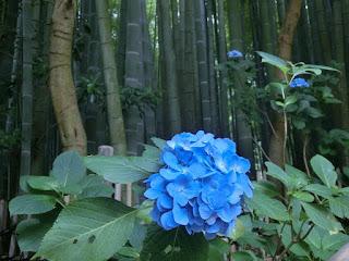 報国寺竹の庭