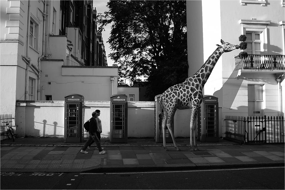 03-Giraffe-Ceslovas-Cesnakevicius-The-Zoo-on-our-Streets-Black-and-White-Photography-www-designstack-co