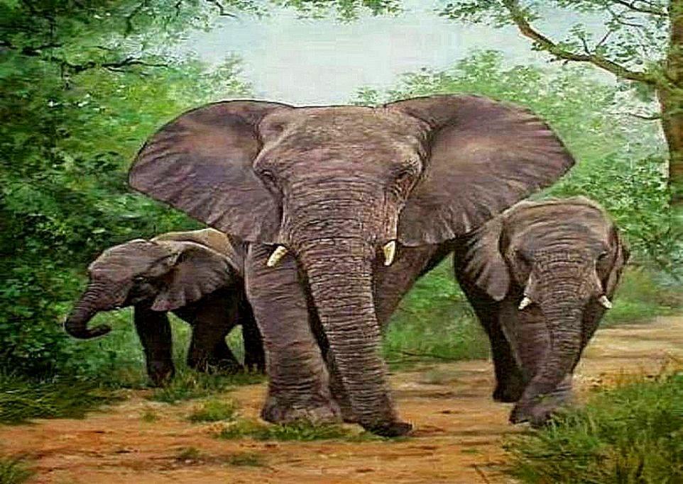3d animals elephants wallpaper high definitions wallpapers - 3d animal wallpaper ...