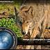 DigiKam 5.x Kurulumu Nasıl Yapılır? (Ubuntu/Linux Mint)