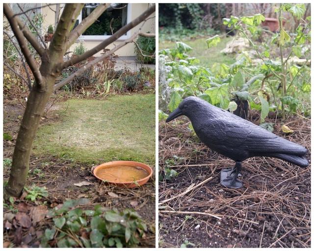 Vogeltränke im Januar und Rabenattrappe als Schutz vor Greifvögeln