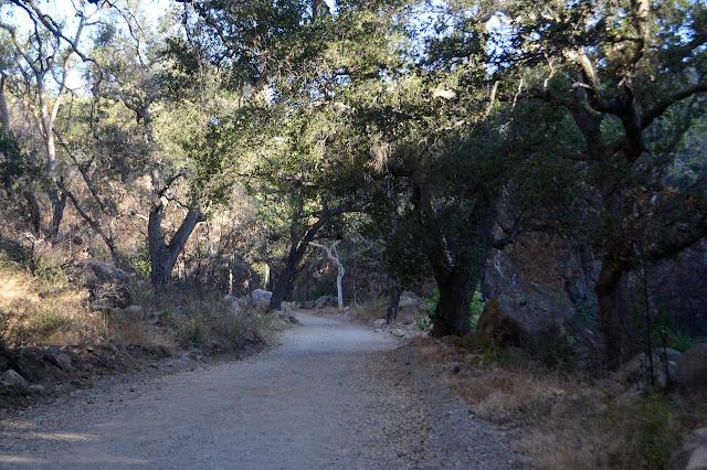 road down under oak trees