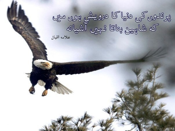 Famous Quotes Of Allama Iqbal In English About Education: TASAWAR: February 2012